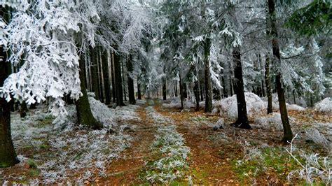 hd wallpaper fir tree road frost forest