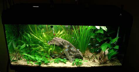 poissons d aquarium eau chaude lancement de mon premier aquarium 120l