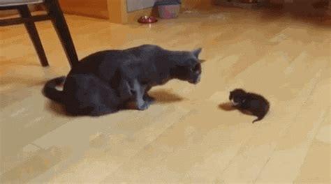 amazing animated cat gifs   animations
