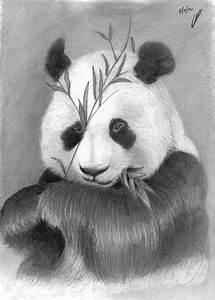 Pin by Elaine Howard on Panda Bears | Pinterest