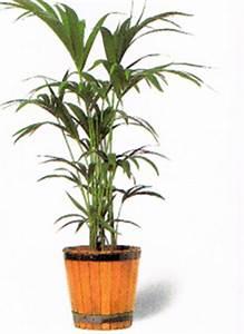 Zimmerpflanzen Sonniger Standort : standort f r zimmerpflanzen die richtige wahl schon vor dem kauf treffen ~ Whattoseeinmadrid.com Haus und Dekorationen