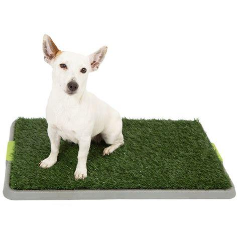 toilette pour chien une id 233 e cadeau originale et tr 232 s pratique