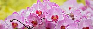 Phalaenopsis Orchid Health And Anatomy