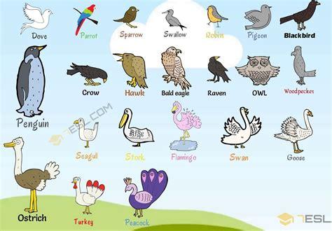 Bird Names: List Of Birds With Useful Birds Images Birds