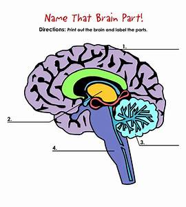 Name That Brain Part!