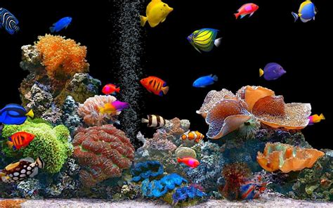 aquarium live wallpaper play store revenue