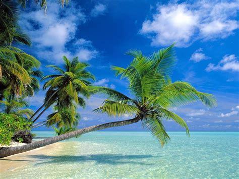 coconut trees beach  wallpaperscom