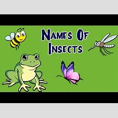 Names Of Insects For Kids  Learn About Insects And Bugs  Preschool Learning Videos For Kids