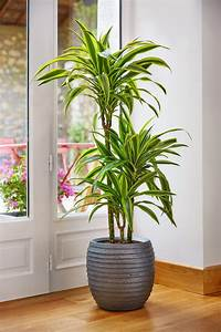 Plante D Intérieur Haute : plante d int rieur haute fleuriste bulldo ~ Premium-room.com Idées de Décoration