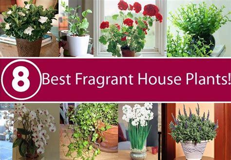 Best 8 Fragrant House Plants