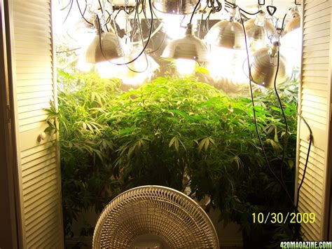 400watt hps vs 400watts of cfls