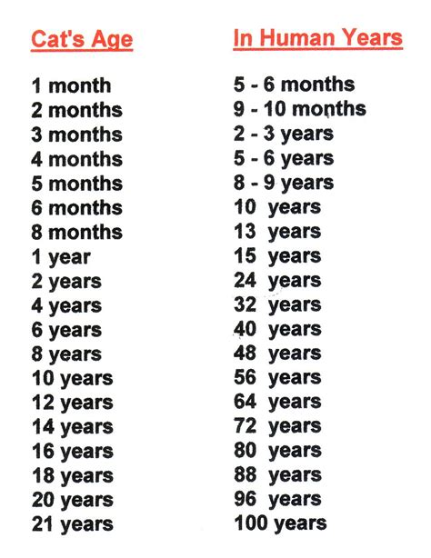 cat years chart my cats are french