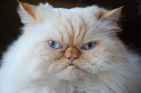 9 Funny Cat Videos Lovetoknow