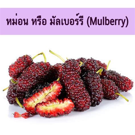 พันธุ์พืช: ลูกหม่อน หรือ มัลเบอร์รี่(ชื่อวิทยาศาสตร์ ...