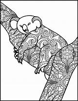 Koala Coloring Pages Adult Animal Printable Adults Etsy Already sketch template