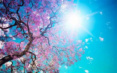 Spring Backgrounds Animated Background Wallpapers Desktop Scenery