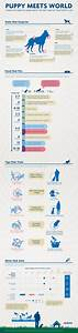 8 best vaccine infographic images on pinterest puppy With puppy bathroom schedule