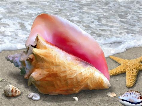 conch shell beach painting by stephen jorgensen