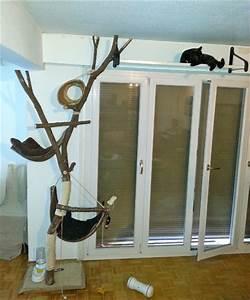 Arbre à Chat Fait Maison : mon chat est agressif que faire question comprendre son chat wamiz ~ Melissatoandfro.com Idées de Décoration