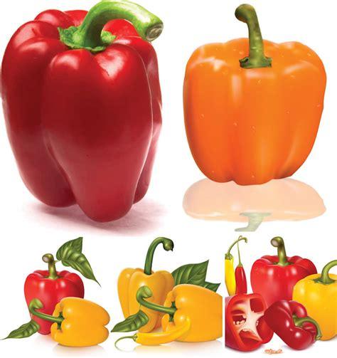 bell pepper clipart bell peppers clipart 39