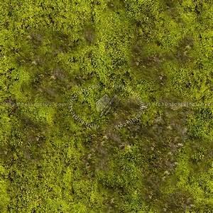 Moss texture seamless 13152