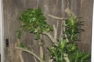 Pflanzen Für Terrarium : marinesystems terrarium 110x60x215cm cham leon marinesystems ~ Orissabook.com Haus und Dekorationen
