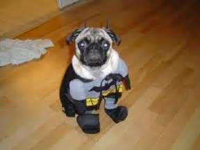 Puppies Pug Costumes