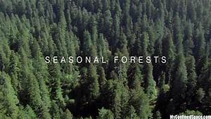 Planet Earth Seasonal Forests Worksheet (page 3) - Pics ...