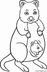 Quokka Coloring Mother Coloringall Illustrations Vectors Latest sketch template