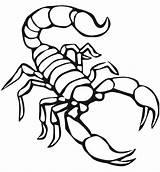 Coloring Pages Printable Scorpion Animals Preschool Scorpions Animal Drawing Reptiles Worksheets Crafts Preschoolcrafts Kindergarten Disimpan Dari sketch template