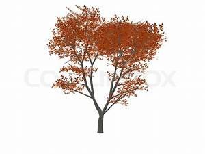 Baum Mit Roten Blättern : baum mit kleinen roten bl ttern komplett auf einem wei en hintergrund stockfoto colourbox ~ Eleganceandgraceweddings.com Haus und Dekorationen