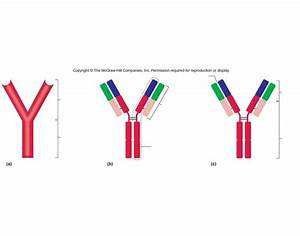 Antigen Structure