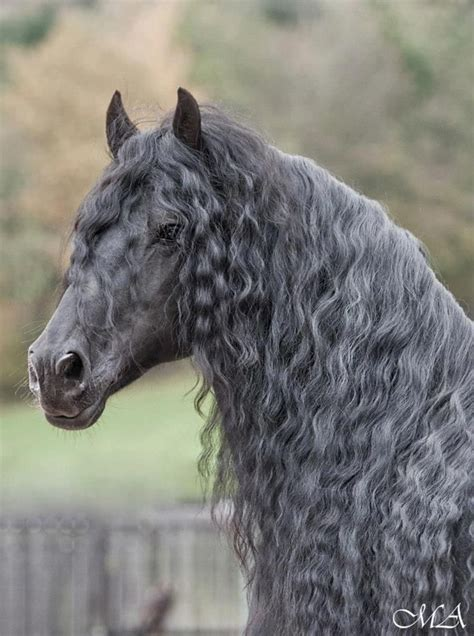 terrifying long haired horses   theyre hiding