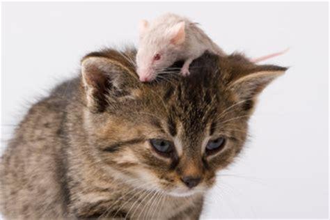 Was Essen Mäuse Gerne by Was Essen Katzen So Versorgen Sie Ihr Haustier Richtig