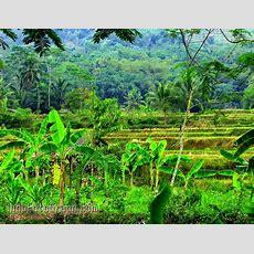 Wallpaper Hd Alam King Images Wallpaper Patterned Plain Retro
