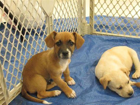 small breeds dogs    adoptionrescue