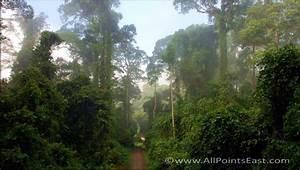 Borneo's Danum Valley
