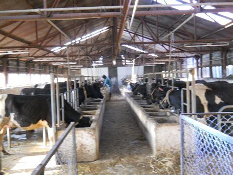 design artikel here cow shed design kerala artikel