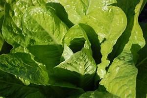 Salat Pflanzen Abstand : wonnemonat mai buntes gem se gesunde wildpflanzen und leckerer honig gartengestaltung mit ~ Markanthonyermac.com Haus und Dekorationen