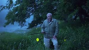 David Attenborough's Light on Earth (Life That Glows ...