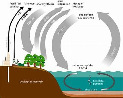 Cycle Carbon Diagram Simple Phosphorus Svg Water