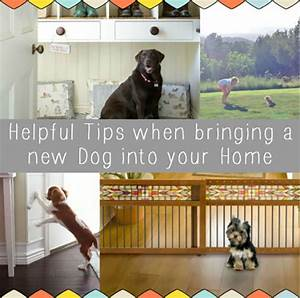 Helpful tips when bringing a new dog into your home for Bringing a new dog home