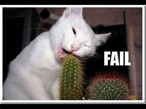 The funniest an... Funny Cat Videos