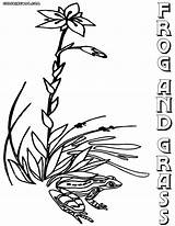 Grass Coloring Pages Grass1 Coloringway sketch template
