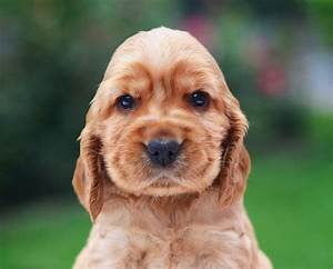 Top 12 Dog Breeds That Have the Cutest Puppies Ever - DogVills