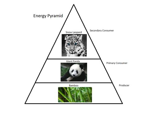 web cuisine panda food web pictures to pin on pinsdaddy