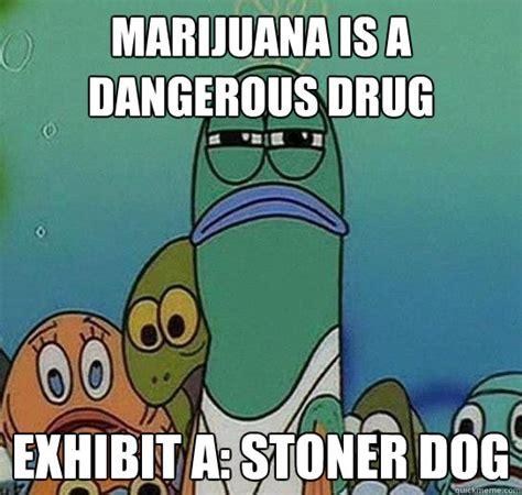 Spongebob Weed Memes - marijuana is a dangerous drug exhibit a stoner dog serious fish spongebob quickmeme