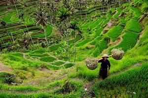 Bali Rizire