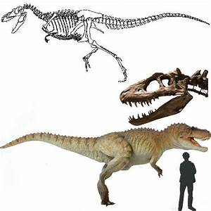 127 best images about Dinosauricon A : Albertosaurus ...