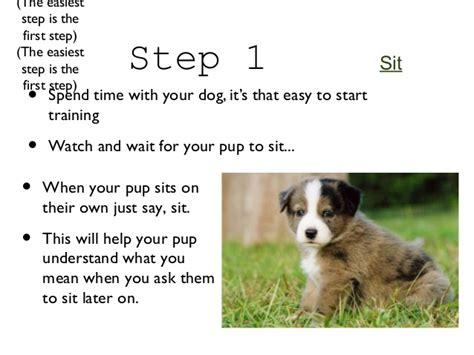 train puppies  life